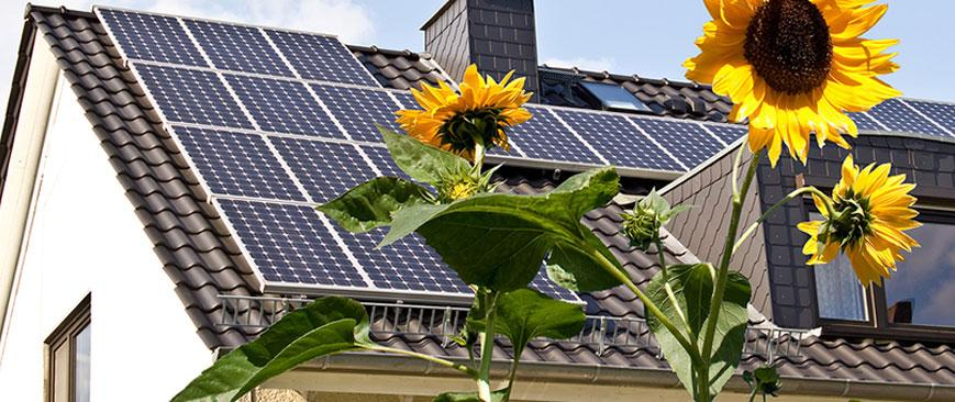 Home with solar panels on and sunflowers growing
